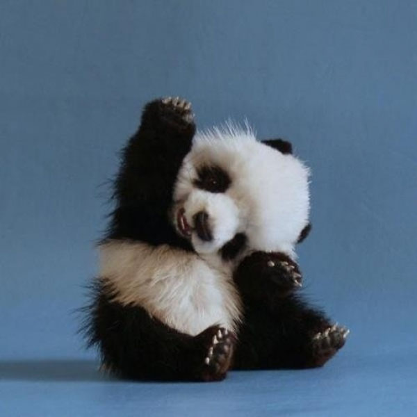 50 Incredibly Cute Baby Animal Pictures