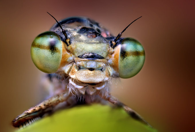 Green eyes by Ondrej Pakan - Downloaded from 500px_jpg