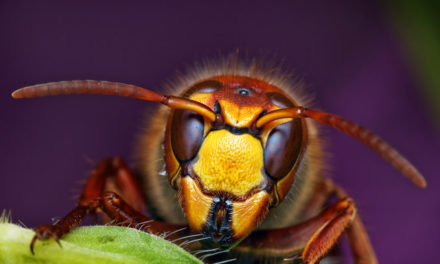 120 Mind Blowing Macro Photos by Ondrej Pakan