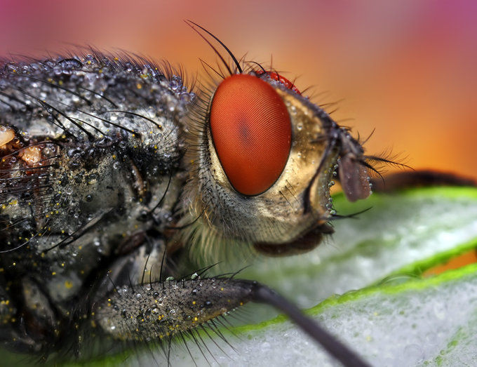 Red fly by Ondrej Pakan - Downloaded from 500px_jpg