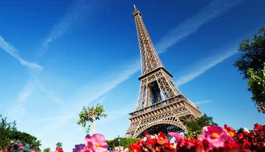 pink flowers eiffel tower wallpapers free download hi res